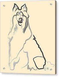 Dog - Lassie Acrylic Print