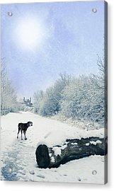 Dog Looking Back Acrylic Print by Amanda Elwell
