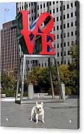Dog Love Acrylic Print by Lisa Phillips