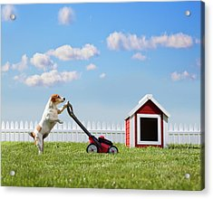 Dog Mowing Lawn Near Dog House Acrylic Print by Pm Images