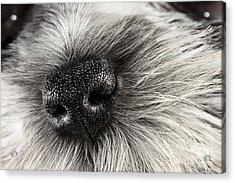Dog Nose  Acrylic Print