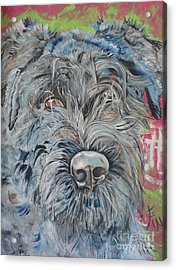 Dog Of Flanders The Bouvier Acrylic Print by PainterArtist FIN