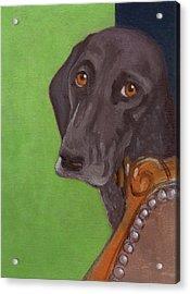 Dog On Chair Acrylic Print