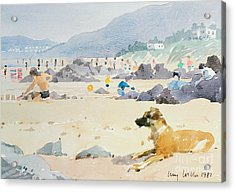 Dog On The Beach Woolacombe Acrylic Print by Lucy Willis