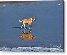 Dog On Water Mirror Acrylic Print