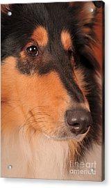 Dog Portrait Acrylic Print by Randi Grace Nilsberg
