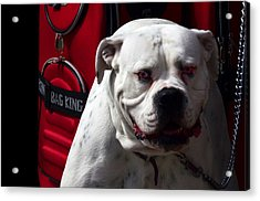 Dog Power Acrylic Print by Camille Lopez