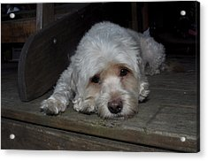 Dog Resting On Porch Acrylic Print