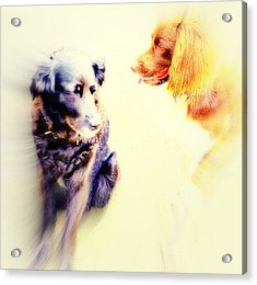 If You Are Dreaming Of A Dog Romance Dream Again  Acrylic Print