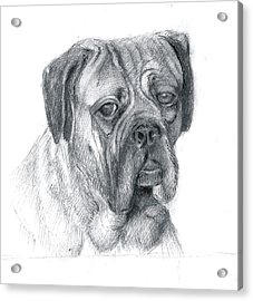 Acrylic Print featuring the drawing Boxer Dog by Rose Wang