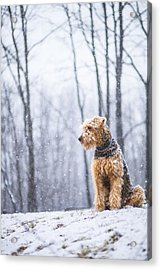 Dog Sits Under The Snowfall Acrylic Print