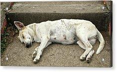 Dog Sleeping, Catarina, Masaya Acrylic Print