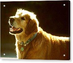 Dog Smile Acrylic Print by Robert  Rodvik