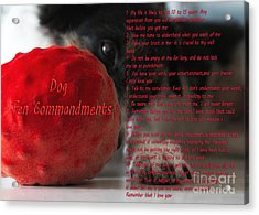Dog Ten Commandments Acrylic Print by Stelios Kleanthous