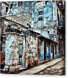 Dog Watching - Havana Acrylic Print