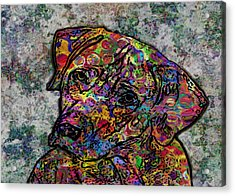 Dog With Color Acrylic Print by Jack Zulli