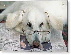 Dog And The News Acrylic Print by Yva Momatiuk John Eastcott
