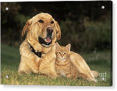 Dog With Kitten Acrylic Print by Rolf Kopfle