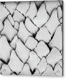 Dogfish Scales Acrylic Print