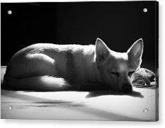 Doggy Dreamin' Acrylic Print