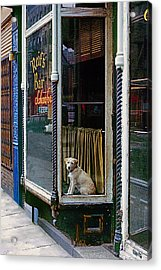 Doggy In The Window Version - 4 Acrylic Print