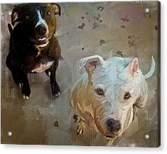 Dogs 2 Acrylic Print by Scott Melby
