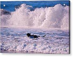Dogs At Carmel California Beach Acrylic Print by Barbara Snyder