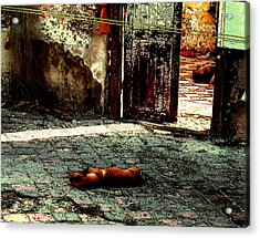 Dogs At Resting Acrylic Print by Will Burlingham