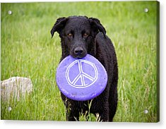 Dogs For Peace Acrylic Print by James BO  Insogna