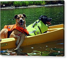 Dogs In A Kayak Acrylic Print