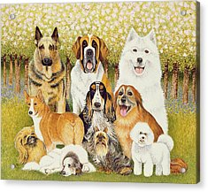 Dogs In May Acrylic Print by Pat Scott