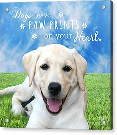 Dogs Leave Paw Prints On Your Heart Acrylic Print by Li Or