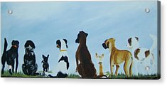 Dogs Looking For Our Forever Home Acrylic Print