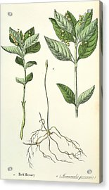 Dog's Mercury Acrylic Print by Sheila Terry/science Photo Library