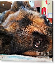 #dogs #pawsforthought #ilovemydog Acrylic Print
