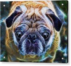 Dogs - The Psychedelic Fantasy Pug Acrylic Print by Lee Dos Santos