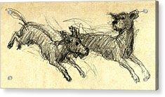 Dogsketch Acrylic Print by Nato  Gomes