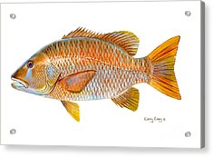 Dogtooth Snapper Acrylic Print by Carey Chen
