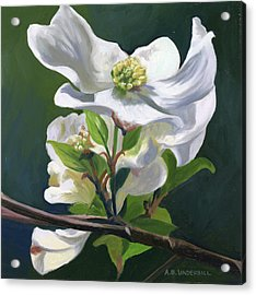 Acrylic Print featuring the painting Dogwood Blossom by Alecia Underhill