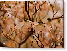 Acrylic Print featuring the photograph Dogwood Day Afternoon by John Harding