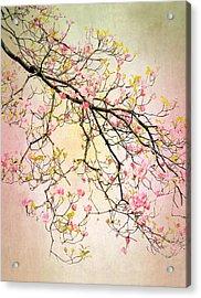 Dogwood Delight Acrylic Print
