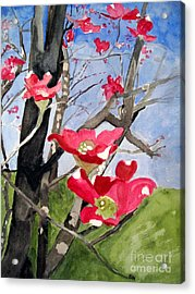 Dogwood Flowers Acrylic Print by Sandy McIntire