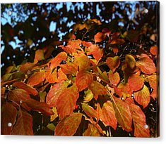 Acrylic Print featuring the photograph Dogwood In Autumn Colors by MM Anderson