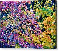 Dogwood Red Acrylic Print by Judy Via-Wolff