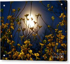Dogwoods And Moonlight Acrylic Print by Judy Via-Wolff