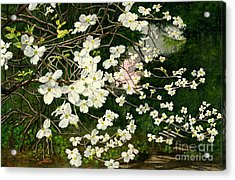 Acrylic Print featuring the painting Dogwoods Virginia by Melly Terpening