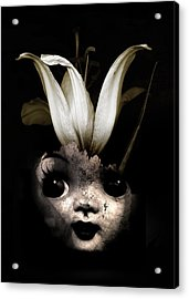 Doll Flower Acrylic Print by Johan Lilja