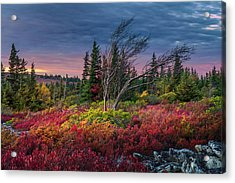 Dolly Sods Windswept Sunset Acrylic Print