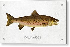 Dolly Varden Acrylic Print by Aged Pixel