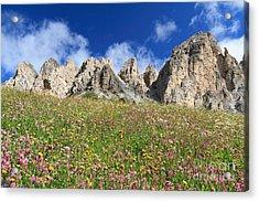 Acrylic Print featuring the photograph Dolomiti - Flowered Meadow  by Antonio Scarpi